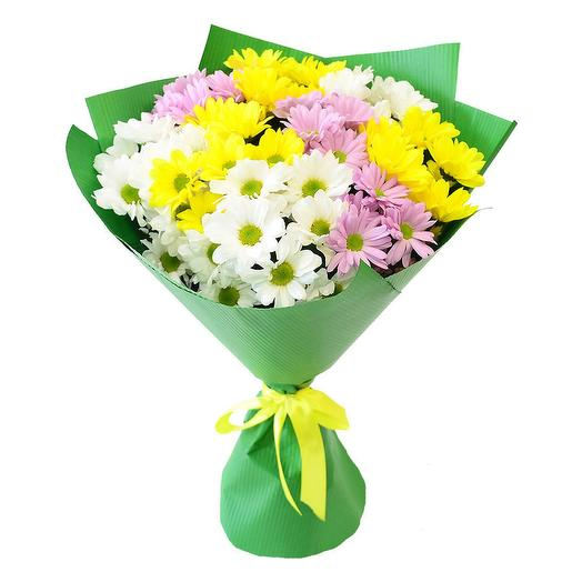 9 разноцветных хризантем в упаковке
