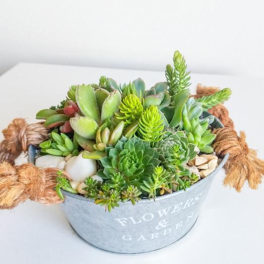 Флорариум в жестяном кашпо Flowers and Garden: букеты цветов на заказ Flowwow