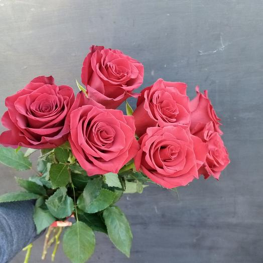 Роза Эксплорер: букеты цветов на заказ Flowwow