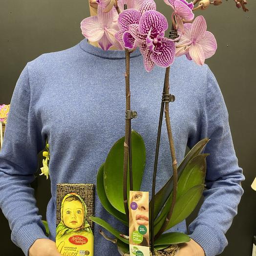 Орхидея фалинопсис: букеты цветов на заказ Flowwow
