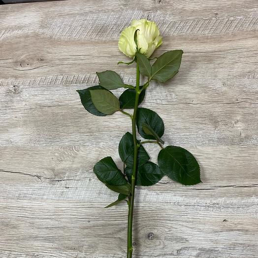 Роза 80 см