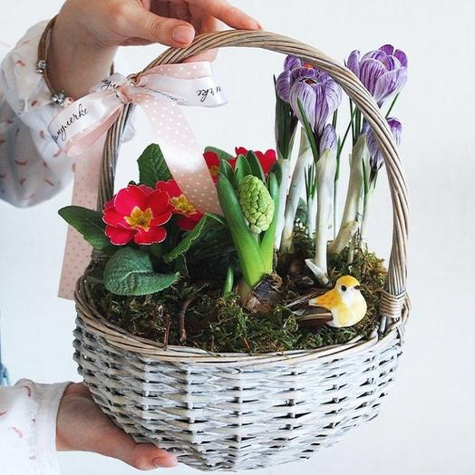 Корзина с первоцветами