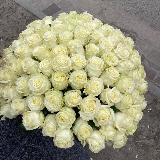 101 роза белая (Вайт найт)50 см