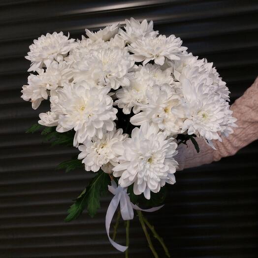 Хризантема белая кустовая под ленту