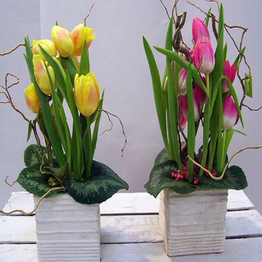 Тюльпаны в кашпо: букеты цветов на заказ Flowwow