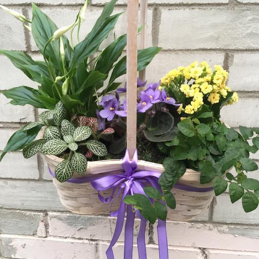Композиция в корзине из многолетних растений