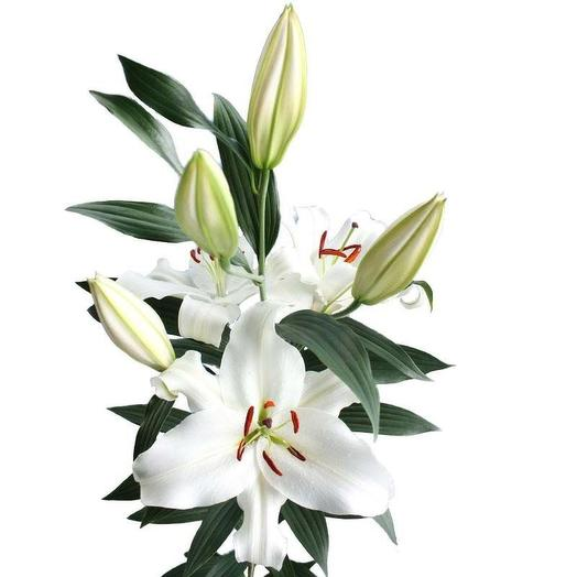 Лилия белая (7 штук): букеты цветов на заказ Flowwow