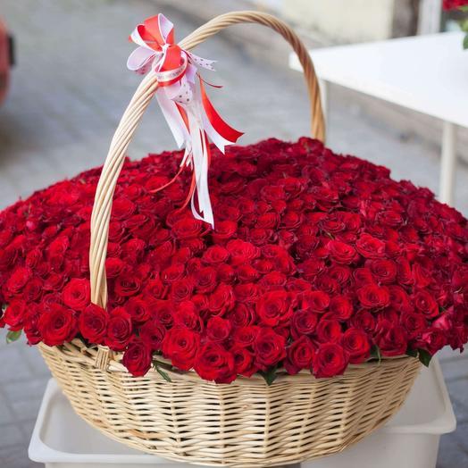 501 красная роза в плетенной корзине