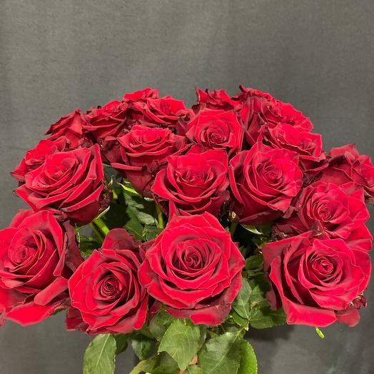 Роза Эксплорер 60 см 21шт