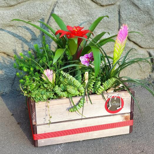 Тропики.: букеты цветов на заказ Flowwow