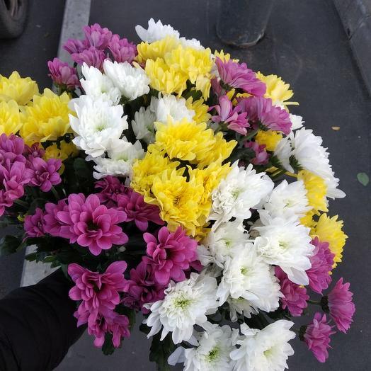 Хризантема кустовая 15шт: букеты цветов на заказ Flowwow