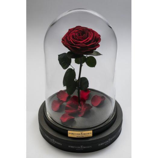 Роза в колбе красная: букеты цветов на заказ Flowwow