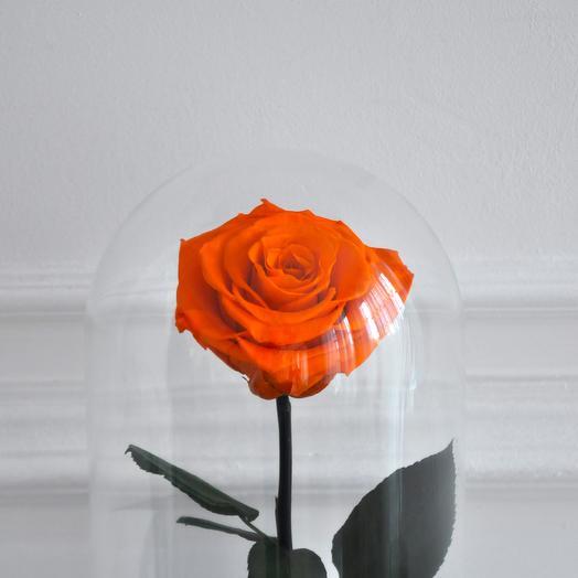 CLOCKWORK ORANGE, ОРАНЖЕВАЯ РОЗА В КОЛБЕ PREMIUM: букеты цветов на заказ Flowwow