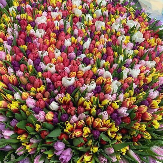 1001 тюльпан