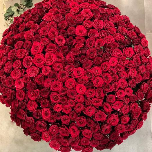 Роза красная 303