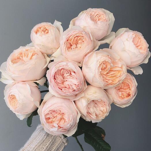 11 нежно-персиковых роз сорта Эмма Вудхаус