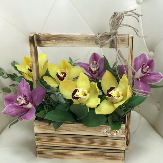 «Стильные орхидеи»