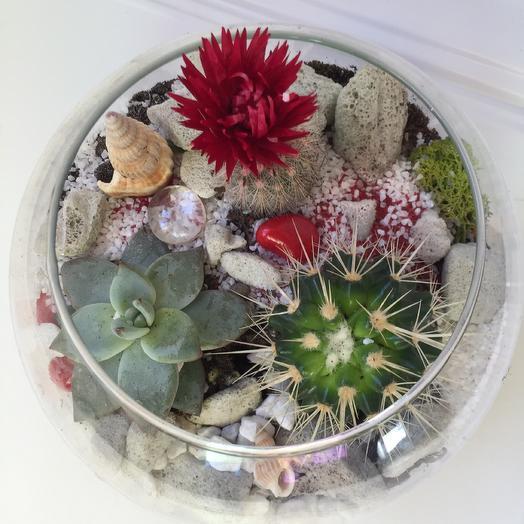 Флорариум «Алый цветок»: букеты цветов на заказ Flowwow