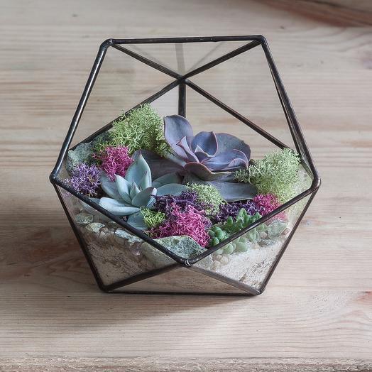 """Геометрический флорариум с суккулентами """"Нежный"""": букеты цветов на заказ Flowwow"""