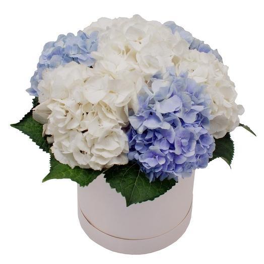 7 гортензий в шляпной коробке: букеты цветов на заказ Flowwow
