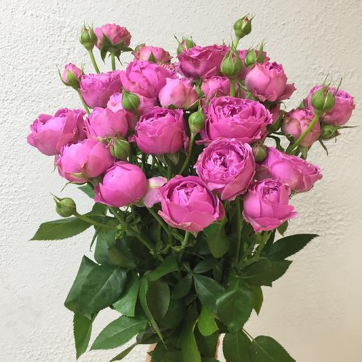 9 пионовидных роз Мисти Бабблз перевязанных атласной лентой: букеты цветов на заказ Flowwow