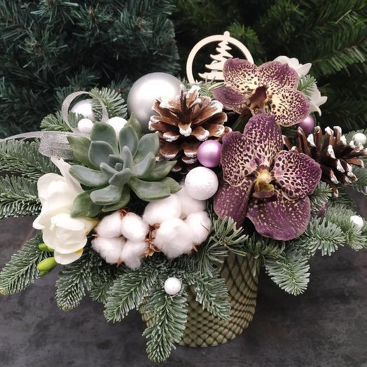 Зимняя композиция с орхидеей Вандой и нобилисом: букеты цветов на заказ Flowwow