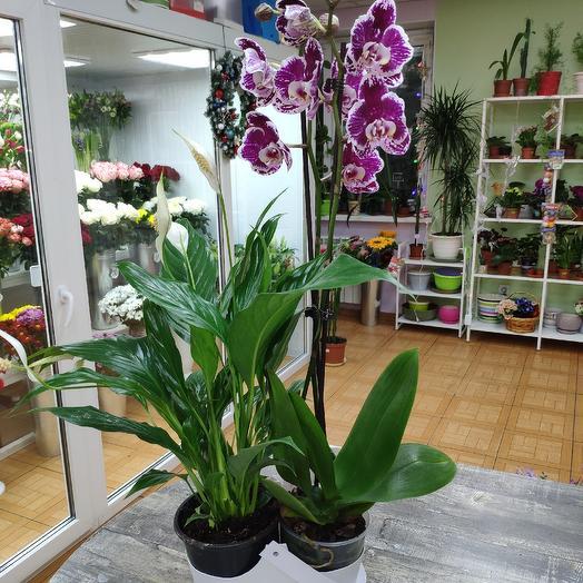 Орхидея фаленопсис и спатифиллум: букеты цветов на заказ Flowwow