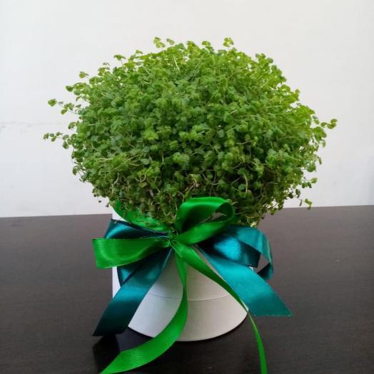 Комнатное растение