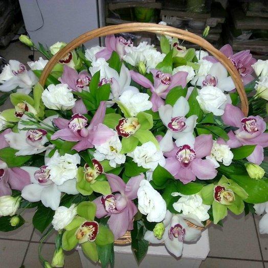 Микс Орхидей