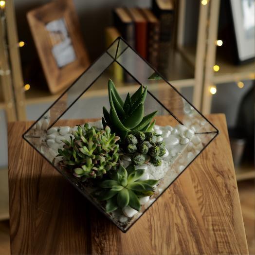 Флорариум с суккулентами: букеты цветов на заказ Flowwow
