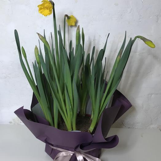 Яркий нарцисс: букеты цветов на заказ Flowwow