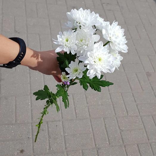 Хризантема кустовая белая пушистая: букеты цветов на заказ Flowwow