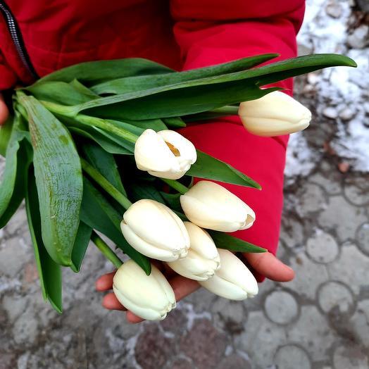 Букет из белоснежного тюльпана