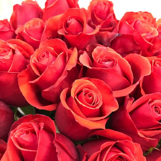 Роза Эквадор Нина-60см