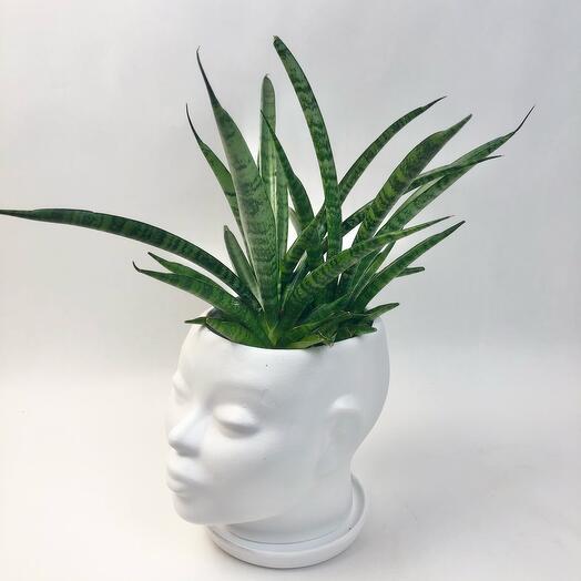Кашпо голова с растением Алое
