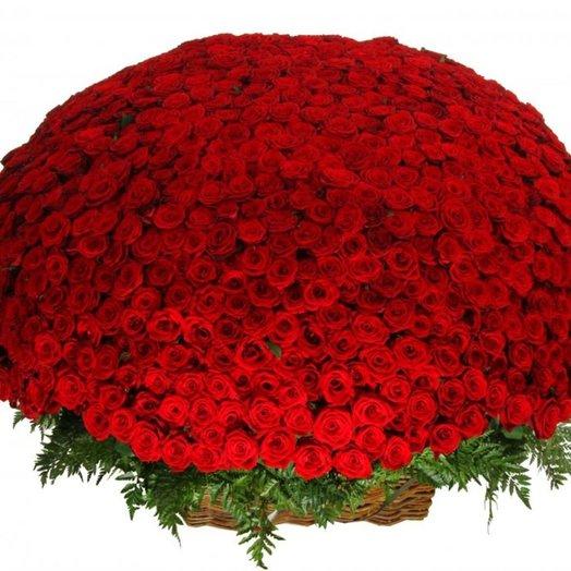 1001 Rose Red