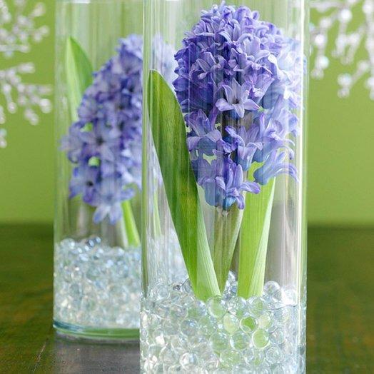 Гиацинт от 1 месяца стоит и растет от Floristic World.: букеты цветов на заказ Flowwow