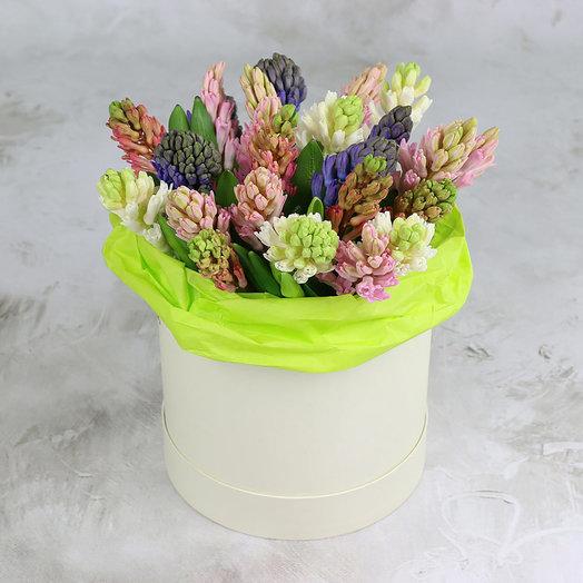 25 гиацинтов в шляпной коробке: букеты цветов на заказ Flowwow
