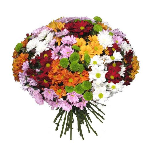 Букет из хризантем Все краски лета: букеты цветов на заказ Flowwow
