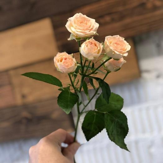 Роза кустовая 60 см