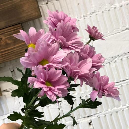 Кустовые хризантемы