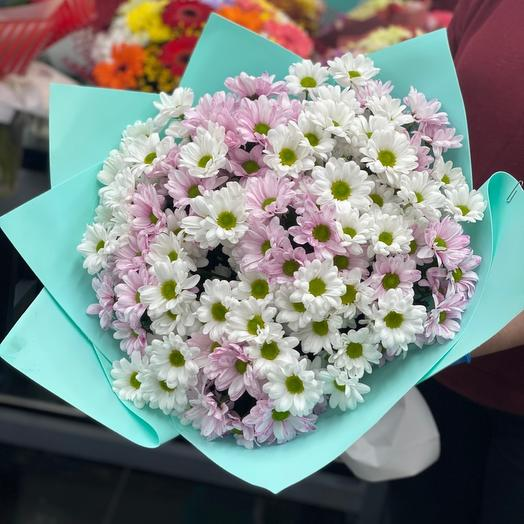 Моно хризантемы