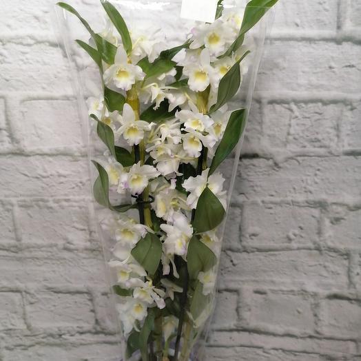 Комнатное растение, орхидея дендробиум