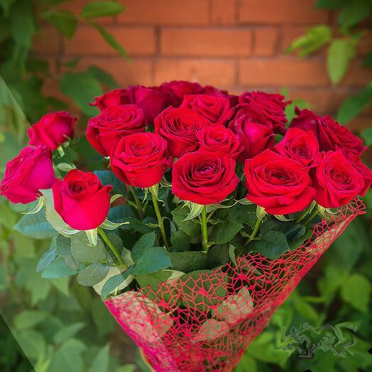 Элитная красная роза 15 шт