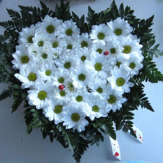Сердце из белых хризантем