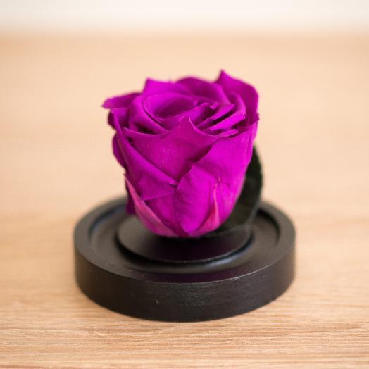 Роза в колбе Микро фуксия: букеты цветов на заказ Flowwow