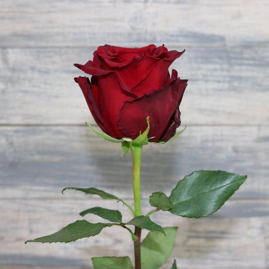 Роза Эквадор Эксплорер