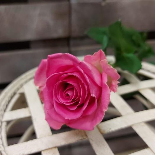 Розы розовые 45 см поштучно