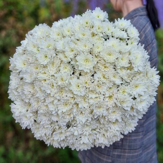 Хризантема кустовая 35 шт