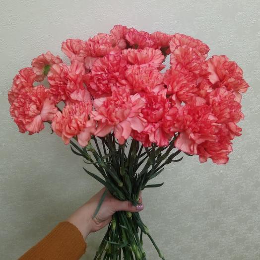 Гвоздика Раджио ди Соль: букеты цветов на заказ Flowwow